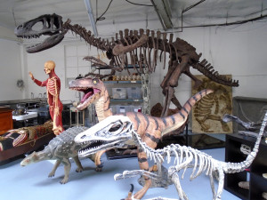 Dapper Cadaver's Dinosaur Collection - photo by Lisa Morton